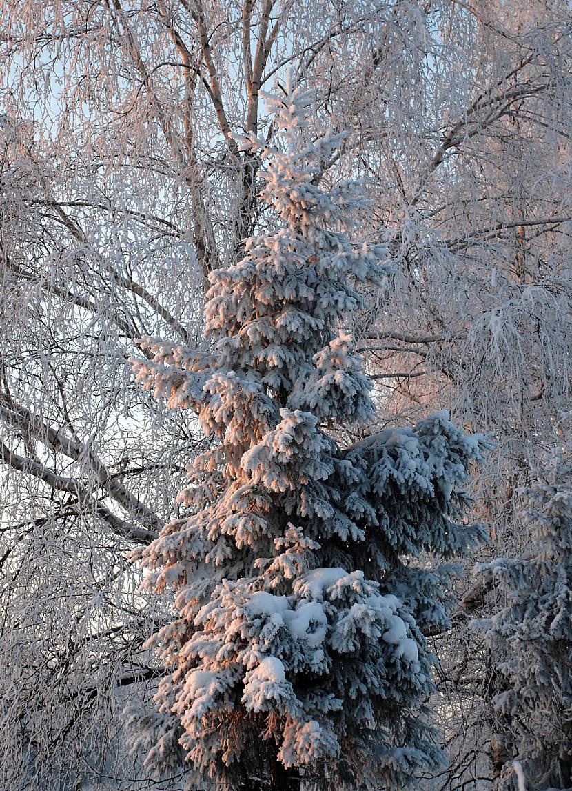 Autors: Ungus divas dienas ziemā