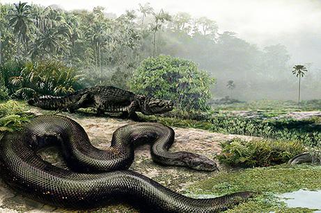 7 lielākā čūska kas atrasta ir... Autors: chesterfields top 10 atklājumi 2009. gadā