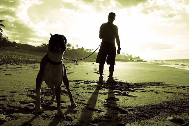 Suņi Neskatoties uz to ka suns... Autors: Wicked Sick No kā Tu visvairāk baidies?