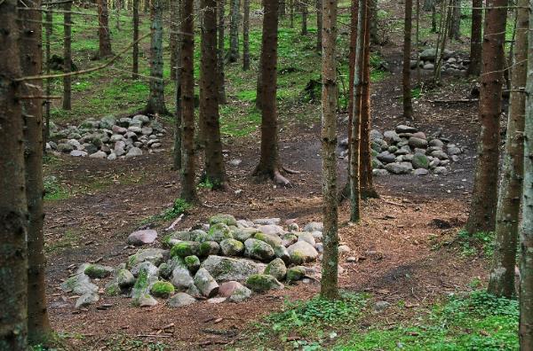 Autors: Bogdanoviča par pokaiņu mežu