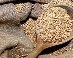 Iesals  ir sadīgušie graudi... Autors: eziiiC Pamācība: Kā pagatavot alu?
