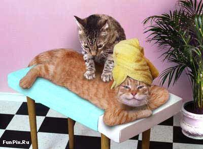 Ja kaķis plēš mēbeles tad... Autors: Fosilija Fakti par kaķiem.