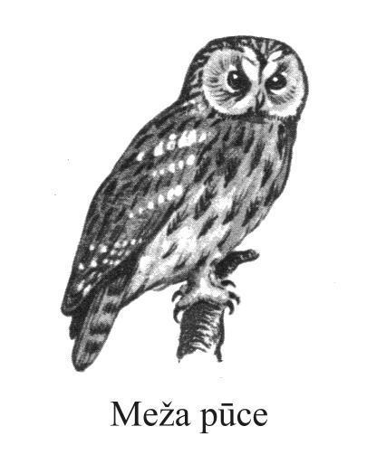 Pūces vienīgie putni kas redz... Autors: kikijaaa2 Fakti par dzīvniekiem.