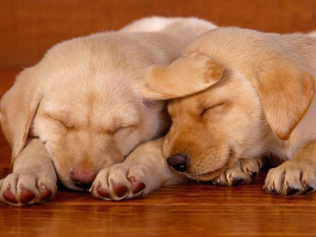 Suņa sirsniņa sitas 70  120... Autors: Evuxi Fakti par suņiem.