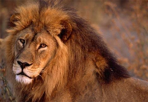 7vietalauvas ir Āfrikas... Autors: ilovepancakes Top10 nāvējošākie dzīvnieki