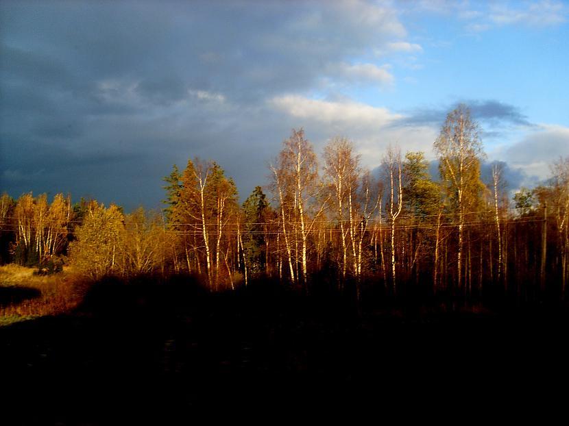 Autors: Gaļka Kad Rīgā bija sniegs....
