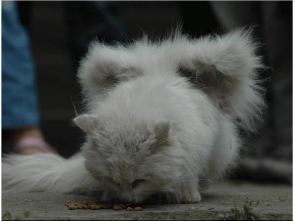 Visizplatītākais iemesls ir... Autors: sviestapika Spārnoti kaķīši