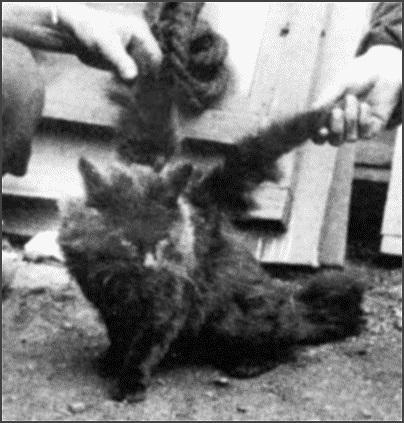 Šis spārnotais kaķis dzīvoja... Autors: sviestapika Spārnoti kaķīši