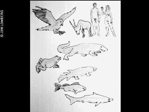 Mugurkaulnieku evolūcijas... Autors: ainiss13 Kosmosā nosūtīts ziņojums citplanētiešiem