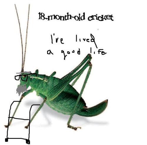 18monthold cricket Autors: dangy captcha`s komiksi.