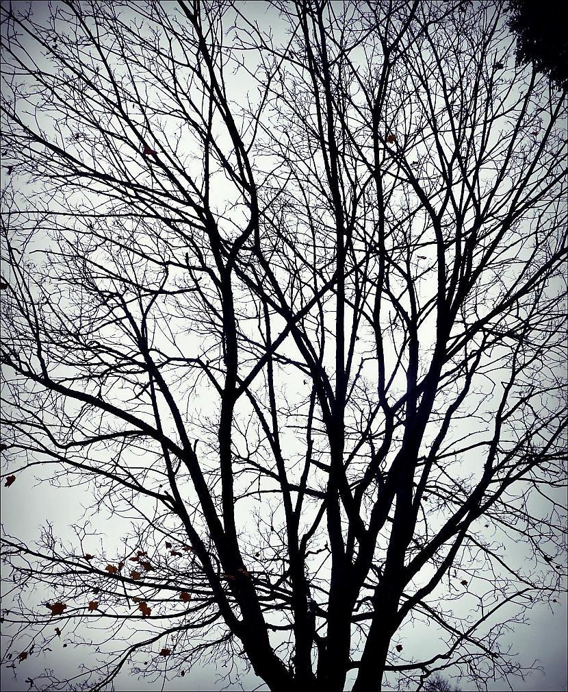 Autors: Līīshe manas bildes