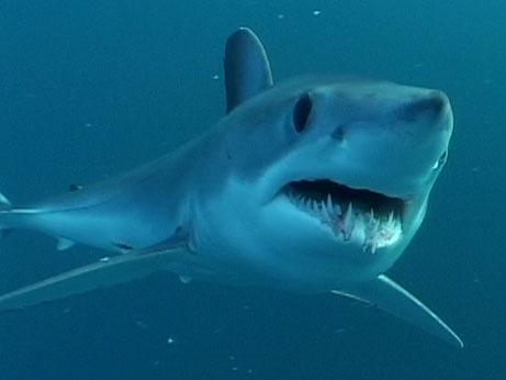 Haizivis ir vienīgie dzīvnieki... Autors: Mr T Interesanti fakti 5.