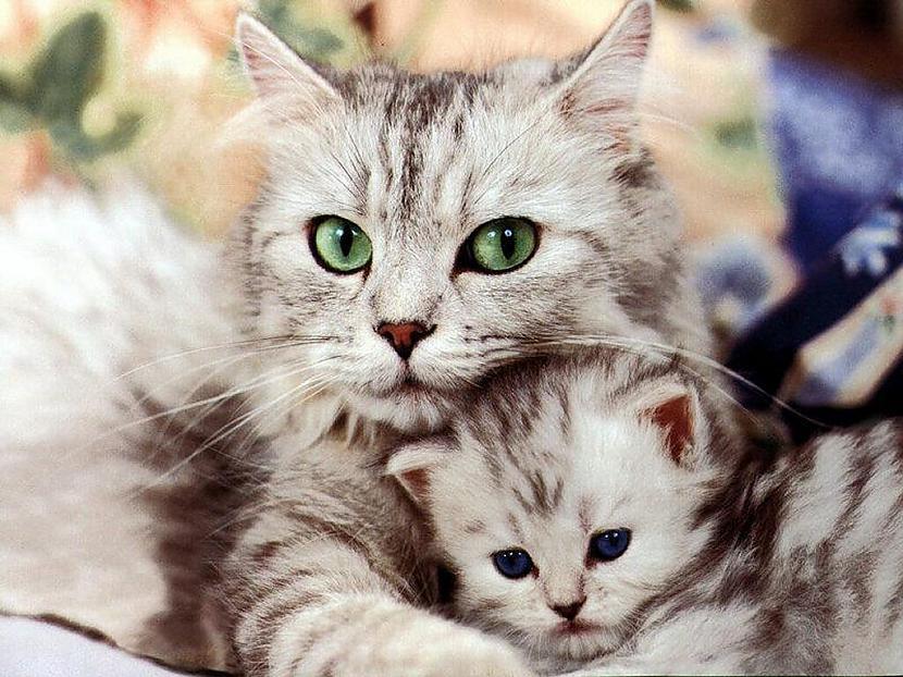 Lai cik aizņemts tu būtu... Autors: Fosilija Mūsu mīļie kaķi 2.daļa