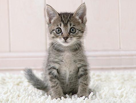 Nekad nelūdz to ko tu vēlies ... Autors: Fosilija Mūsu mīļie kaķi 2.daļa