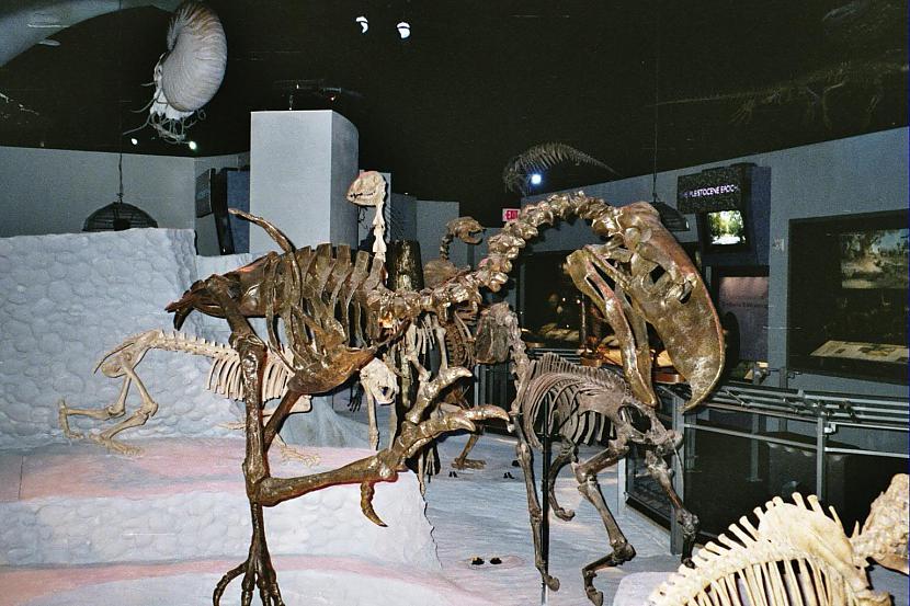 Autors: Fosilija Daži krutākie zīdītāji un putni