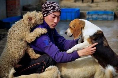 Tā būs būt suņi un kaķi būs... Autors: Shanta Tiek glābti dzīvnieki Ķīnā un Japānā..