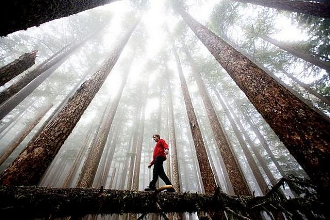 Autors: Sherlok Cits skats uz dabu
