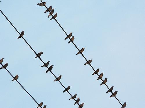 Putni uz vadiem sēdēt nebaidās... Autors: lacukstedy Kāpēc putniem, sēžot uz elektrības vada, nesit elektrī