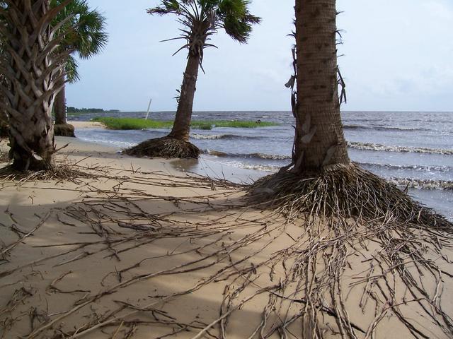 Šaireda salaAtrodas ASVFloridā... Autors: PRESS Bīstamākās pludmales pasaulē.
