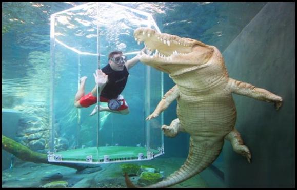 Apmeklētāji par šo 20 minūšu... Autors: MONTANNA Kā peldēt kopā ar krokodiliem