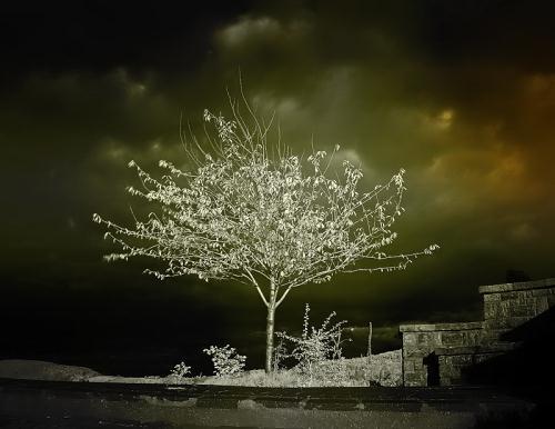 Cavagna Ottavio Autors: jankabanka Neticami infrasarkanās fotogrāfijas paraugi.