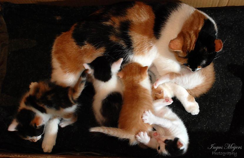 Te mēs visi bariņā pie mammas... Autors: Ungus Kaķu stāsts bildēs