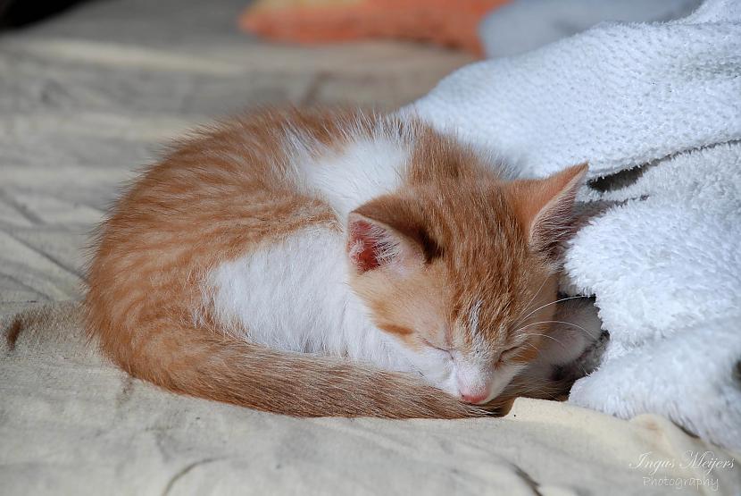 Nu jau jaunajās mājās jaunajā... Autors: Ungus Kaķu stāsts bildēs