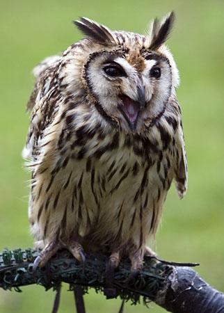 Pūces ir vienīgie putni kas... Autors: Fosilija Vai zināji ka
