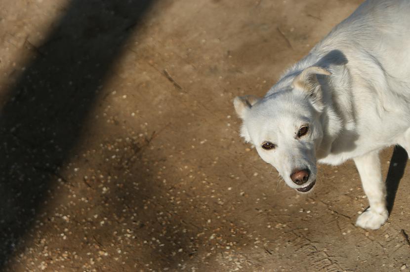 Kaimiņu drauga suns  Gera Autors: Džordžs no Džungłiem Manas Lieldienas!