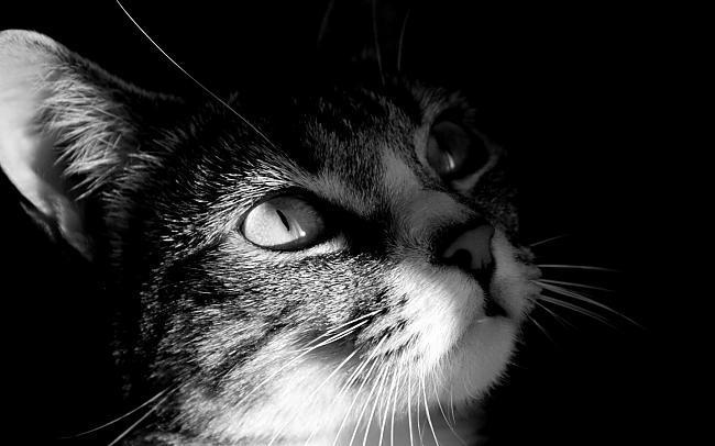 Autors: HeyHo Black&White