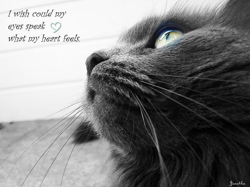 I wish could my eyes speak... Autors: Jano4ka Photo.