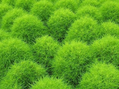 Autors: Fosilija Krāsu raksti - 3! Zaļā krāsa.