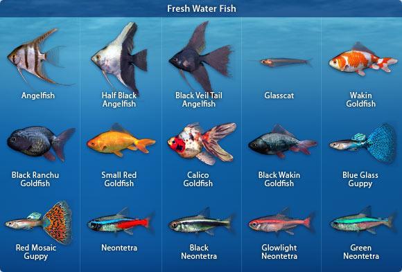 Zivis iedala trīs pamatgrupās... Autors: Fosilija 10 fakti par zivīm.