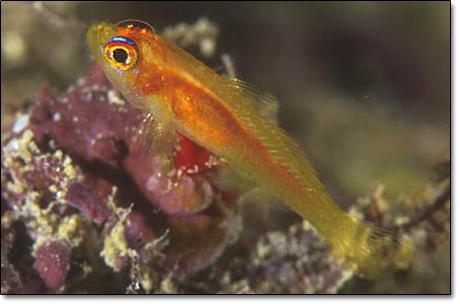 Zivs pārvietojas radot viļņa... Autors: Fosilija 10 fakti par zivīm.