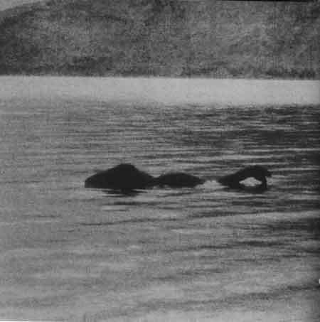 Robežsargi ziņo ka viņi... Autors: SvaigsGaiss Zivs - monstrs!
