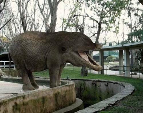 velviens zilondelfins Autors: Fosilija mutantiskie dzīvnieki