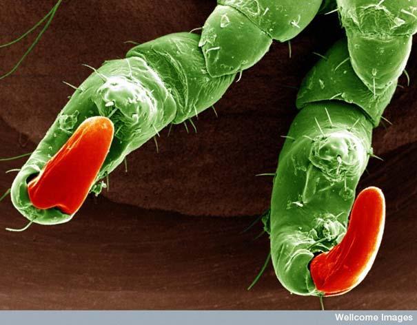 Kaunuma uts nagi Autors: MILFS Aplūkojot pasauli ar mikroskopu