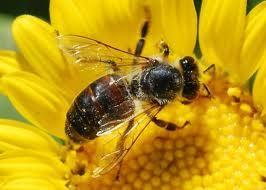 Bišu karaliene izdēj aptuveni... Autors: damanto Fakti, ko tu iespējams nezini. 3