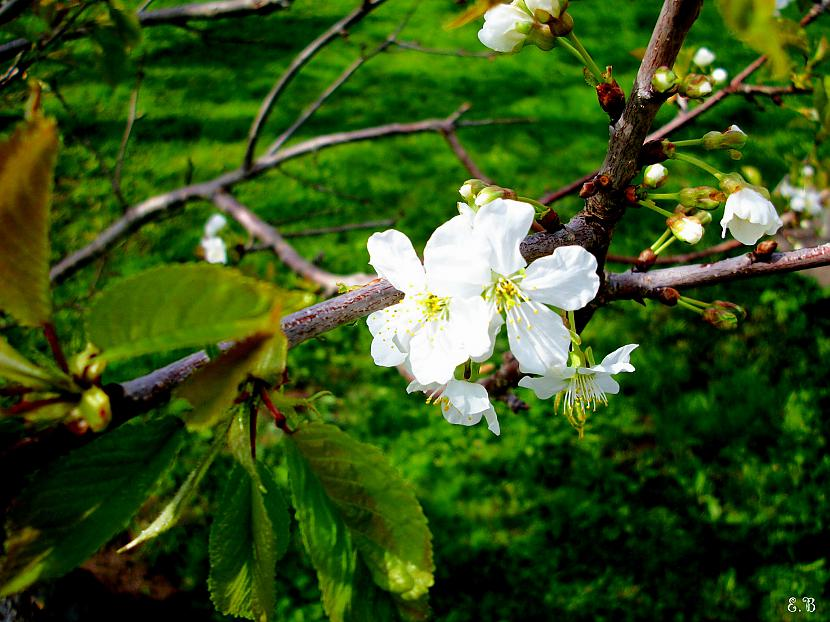 Autors: Fosilija Pavasaris-Krāsās un dabā