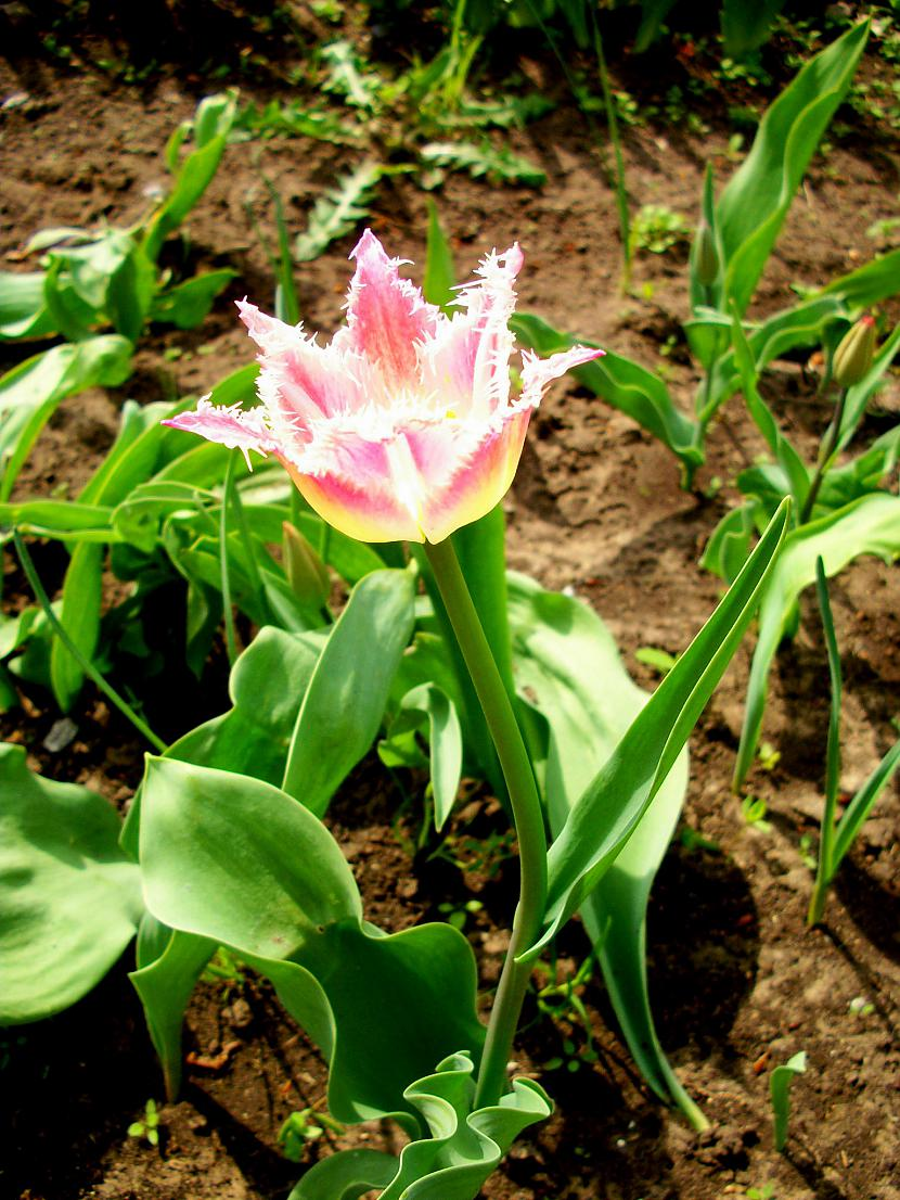 Man šodien gribas saņemt tikko... Autors: Fosilija Pavasaris-Krāsās un dabā