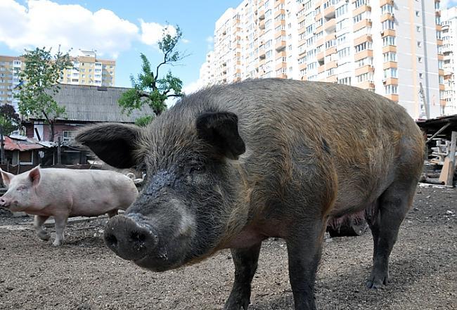 Normāls skats Ukrainas... Autors: ainiss13 Ukrainas galvaspilsēta???