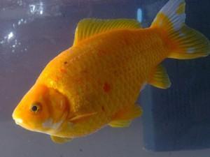 Zivīm kādreiz slāpst Autors: waterstar Vai vari atbildēt?