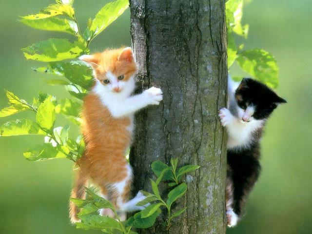Autors: Lil Teemo Jautrie kaķi un suņi.