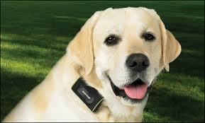 Tas ka suņi ir krāsu akli ir... Autors: Sandulkins 10 Dažādi fakti
