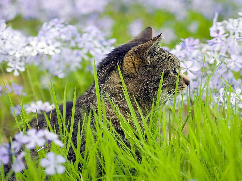 Autors: HuHa Kā pļauka pa seju!