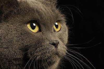 Kaķi dienā guļ vidēji 16... Autors: SūduCentrs Kaķi vai citplanētieši?