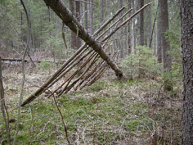 Liekot neliekam pārāk plaši... Autors: Dark Mist Kā uzbūvēt patvērumu mežā.