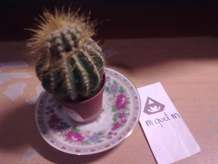 Autors: m quot m kaktuss