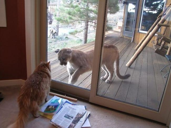 Autors: pofig Kaķis vs Lauva