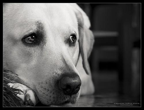 Suns ir vienīgā dzīvā būtne uz... Autors: raiviiops Patiesi īsts draugs